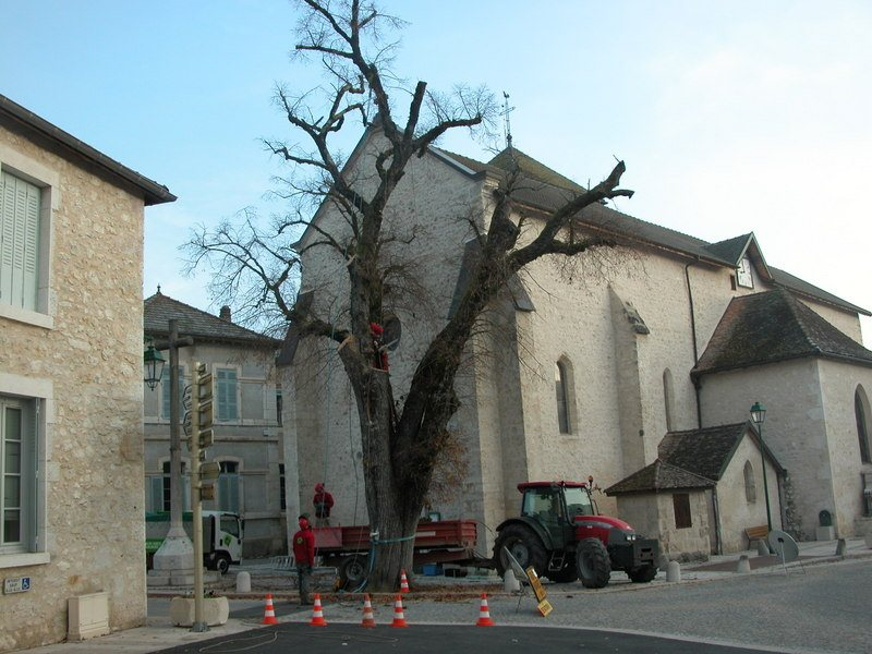 abattage arbre bugey